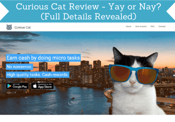 curious cat review header